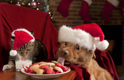 Holiday-Pet-Safety-Tips
