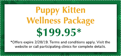 Puppy-Kitten-Wellness