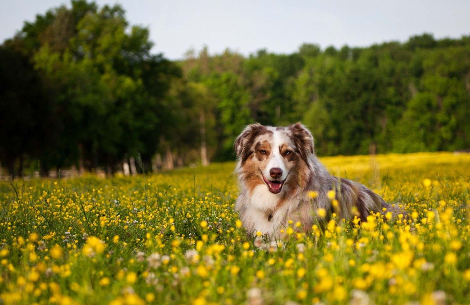 Spring Parasite Prevention Tips for Pets