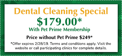 Dental-Cleaning-PET