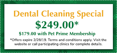 PET-Offers-Dental-Discount
