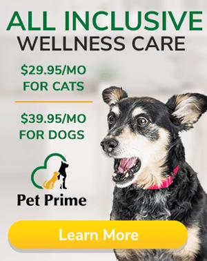 Wellness-Care-Pet-Wellness-Clinics