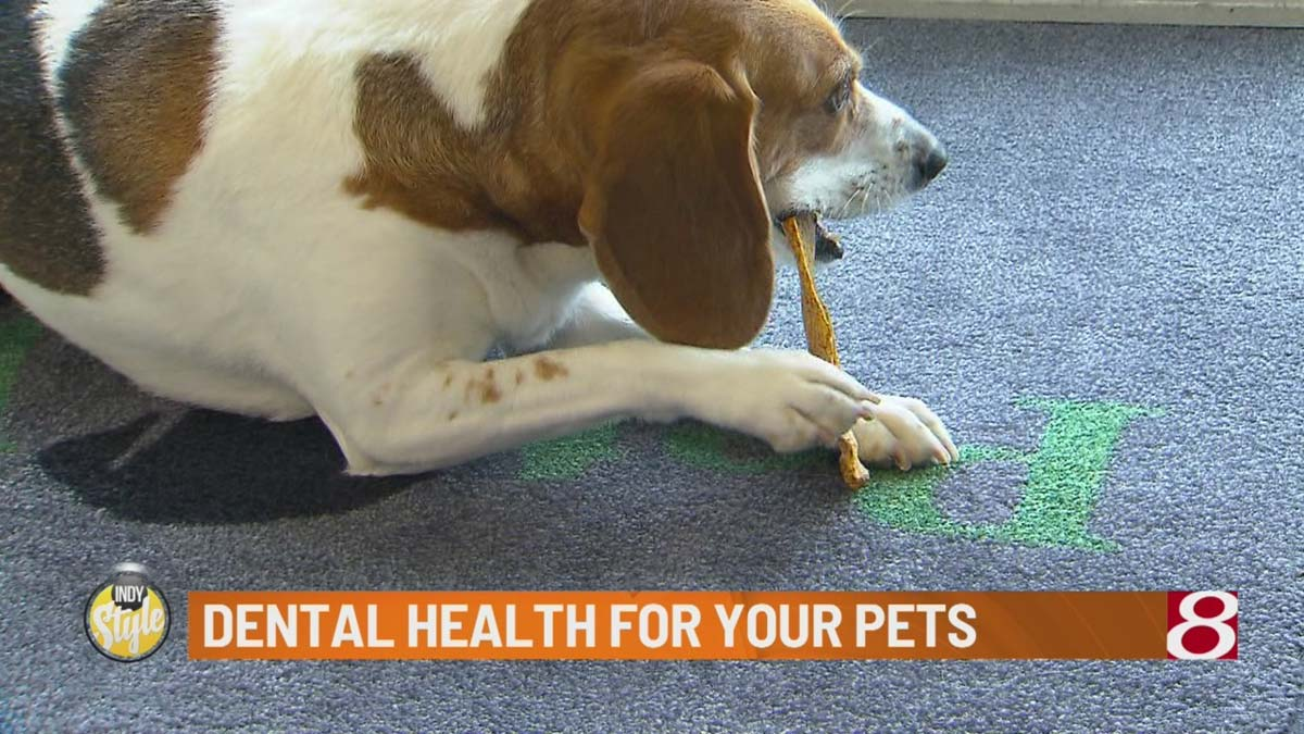 Dental-Health-for-Your-Pets