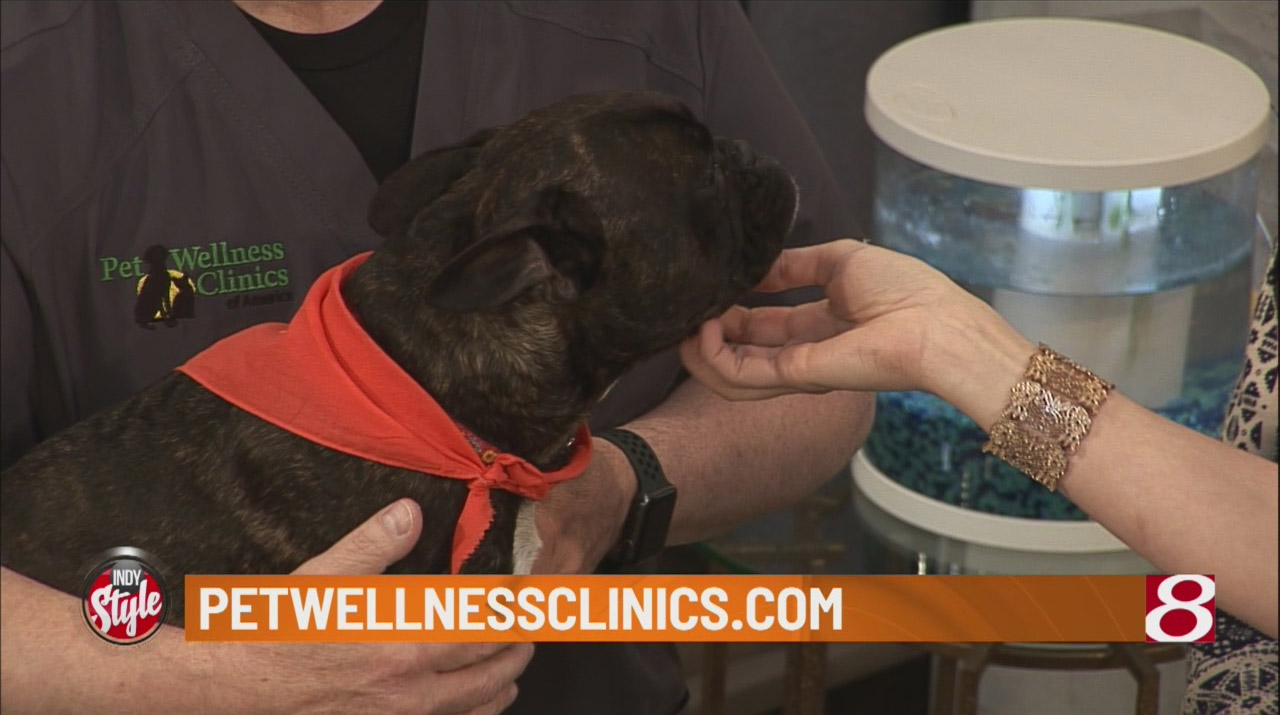 Heartworm-symptoms-to-look-for-in-your-pets