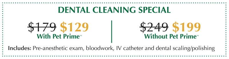 Dental-Cleaning-Special