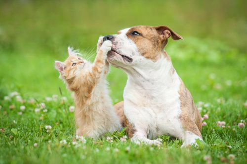 National Heartworm Month